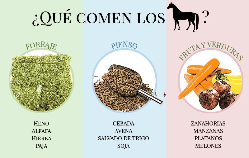 comida de los caballos