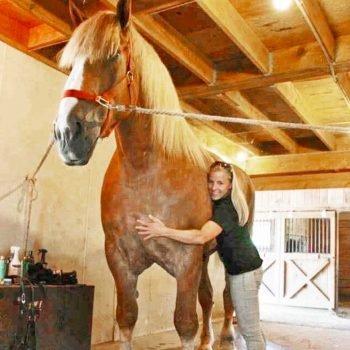 Big Jake el caballo más grande del mundo