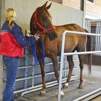 Pesamdo un caballo