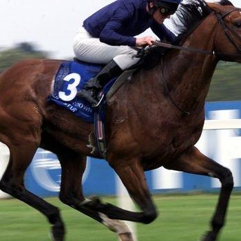 Galileo - el caballo más caro del mundo