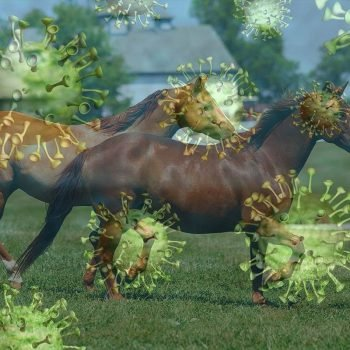 Corona-caballos